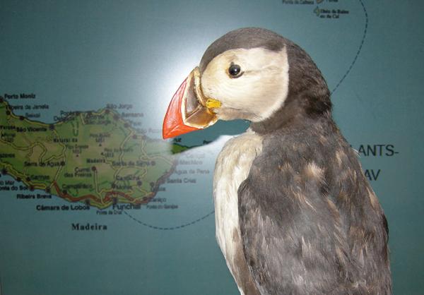 Lundar eru sjáldsamir á Madeira